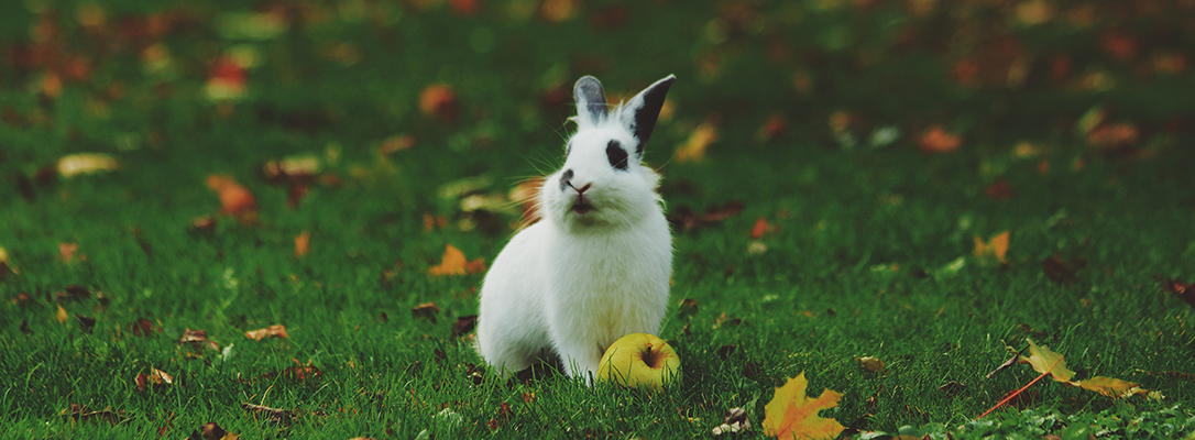 White bunny rabbit on grass