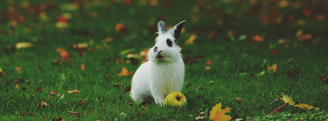 White bunny rabbit on grass