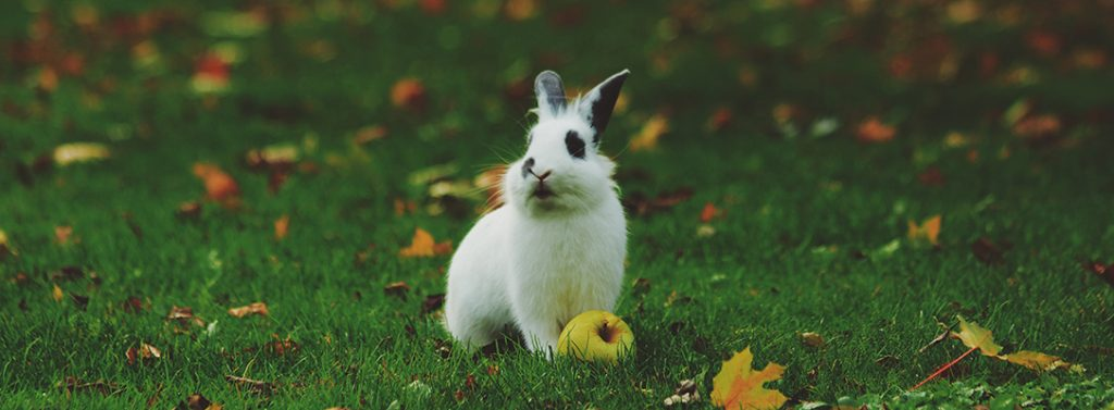 Top Easter Eggs for your grandchildren